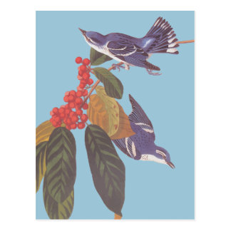 Paires Cerulean d'oiseau de la fauvette d'Audubon Cartes Postales