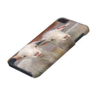 Paires d'agneaux commerciaux de Targhee Coque iPod Touch 5G