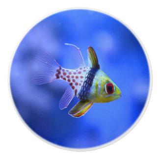 Pajama Cardinalfish Ceramic Knob
