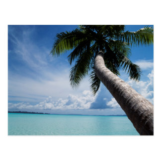 Palau, Micronesia, Palm tree at Palau Lagoon Postcard
