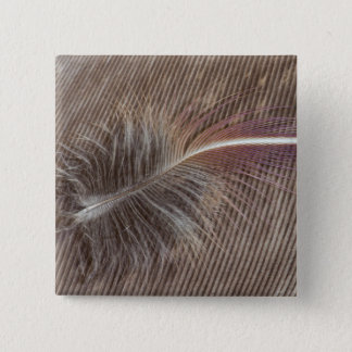 Pale Brown Feather Still Life 2 Inch Square Button