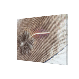 Pale Brown Feather Still Life Canvas Print