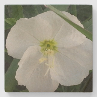 Pale Evening Primrose Stone Coaster