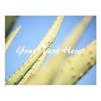 Pale Green Aloe Plants Blue Sky Postcard