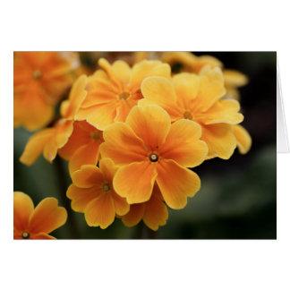 Pale orange petals card