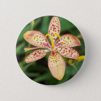 Pale orange spotted Blackberry lily 2 Inch Round Button