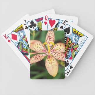 Pale orange spotted Blackberry lily Bicycle Playing Cards