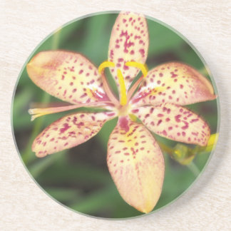 Pale orange spotted Blackberry lily Coaster