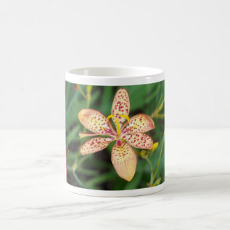 Pale orange spotted Blackberry lily Coffee Mug