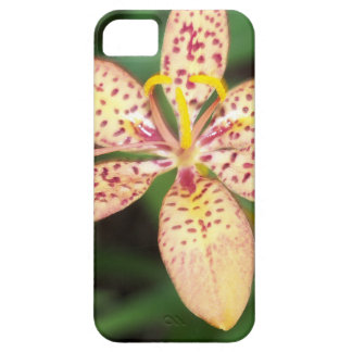 Pale orange spotted Blackberry lily iPhone 5 Case