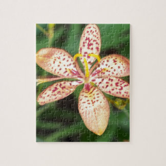 Pale orange spotted Blackberry lily Jigsaw Puzzle