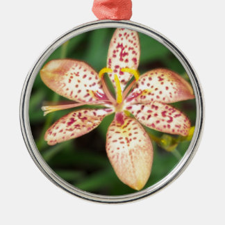 Pale orange spotted Blackberry lily Metal Ornament