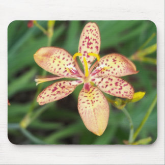 Pale orange spotted Blackberry lily Mouse Pad