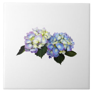 Pale Pink and Blue Hydrangea Ceramic Tile
