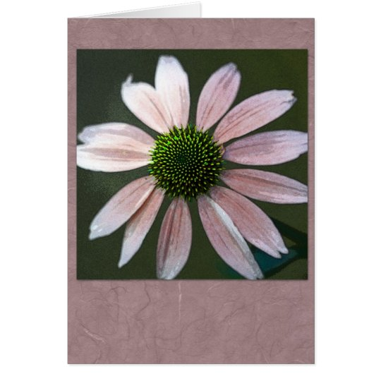 Pale pink echinacea card