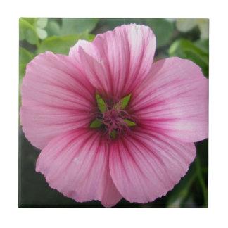 Pale Pink Lavatera Tile