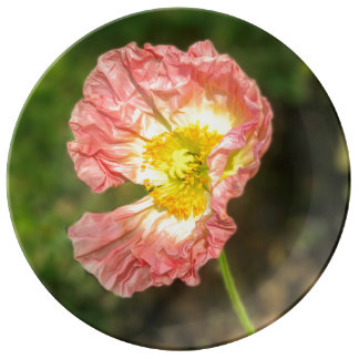 Pale Pink Poppy Fine Porcelain Plate