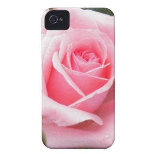Pale Pink Rose Blackberry Bold Case