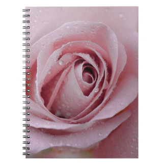 pale pink rose note books
