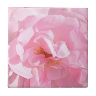 pale pink rose petals ceramic tile