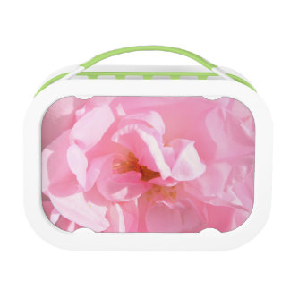 pale pink rose petals lunch box