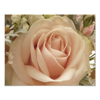 Pale pink rose photograph