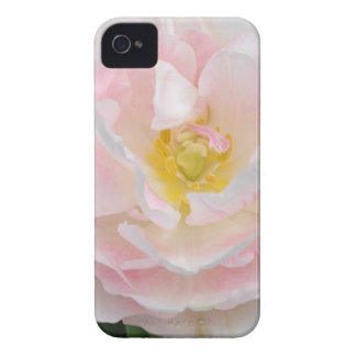Pale pink tulip flower iPhone 4 case