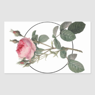 Pale pink vintage roses painting sticker