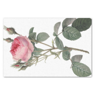 Pale pink vintage roses painting tissue paper