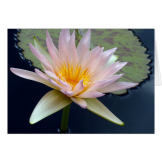 Pale Pink Water Lily Card