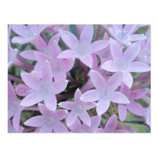 Pale Purple Flowers Post Cards