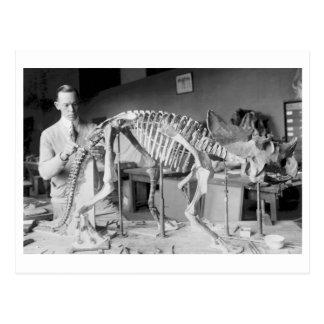 Paleontology Scientist Baby Dinosaur Vintage Postcard