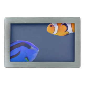 Palette surgeonfish and clown fish swimming belt buckle