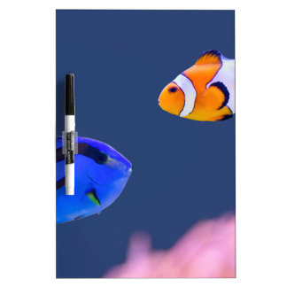 Palette surgeonfish and clown fish swimming dry erase boards
