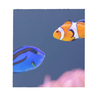 Palette surgeonfish and clown fish swimming notepad