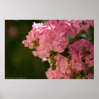 Pâlissez - l'affiche rose de fleurs du Myrte de cr Poster