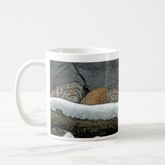 Pallas Cats Snow Mug
