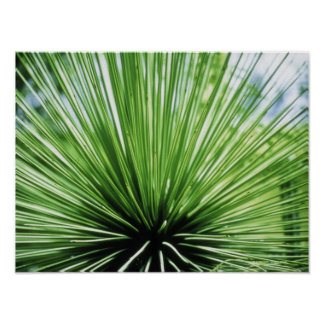 Palm frond, close up poster