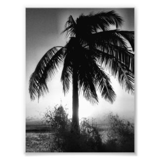 Palm In A Storm Photo