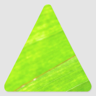 PALM LEAF 1618 LIGHT NEON GREEN NATURE VEGETATION TRIANGLE STICKER