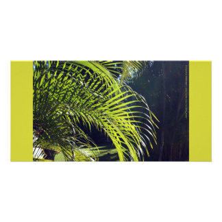 Palm Leaf Frond, Bucerias, Mexico Photo Cards