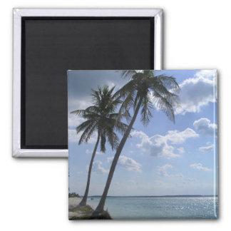 Palm Magnet 2