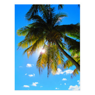 Palm Paradise Blue Sky Sunshine Postcard