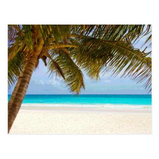 Palm Paradise Blue Sky Sunshine Postcard