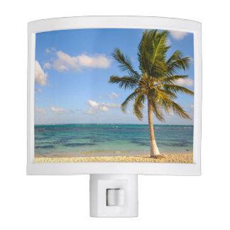 Palm Tree and Beach Night Lights