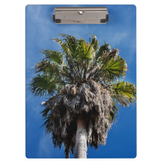 Palm tree and blue skies clip board