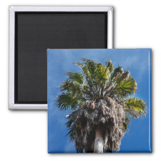 Palm tree and blue skies fridge magnet
