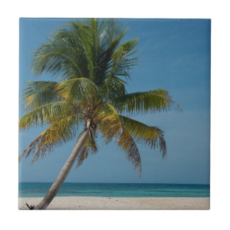 Palm tree and white sand beach  2 tile