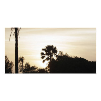 Palm tree at sunset picture card
