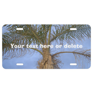 Palm Tree Blue Sky Front License Plate